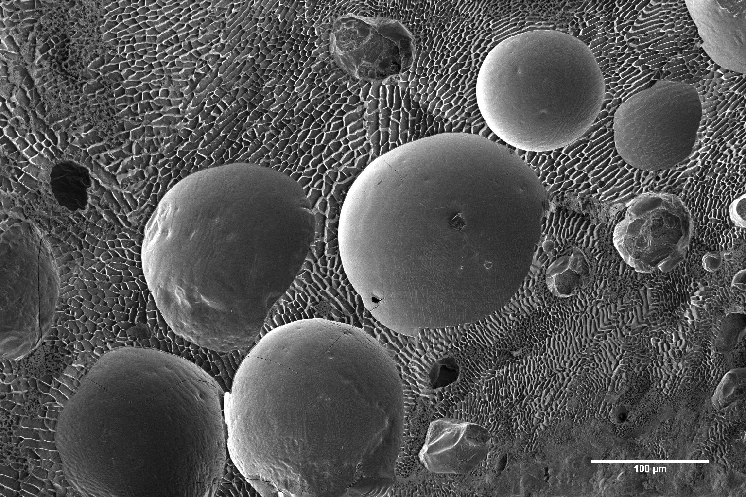 Curdled milk (fractured) showing round milk fat globules within a water/solute matrix (Karin Müller, CAIC, Cambridge)