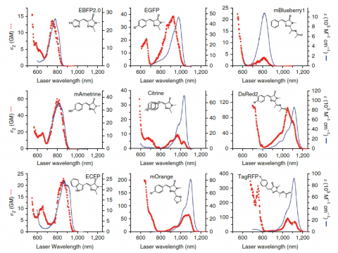 The differences between 2 x single photon excitation and actual 2-photon excitation