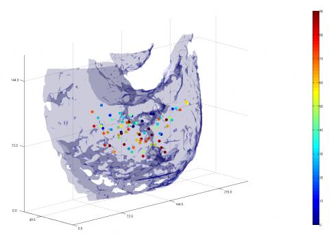 Cell division statistics