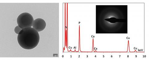 PAR-Ca spheres formed after incubation of the polysaccharide poly (ADP ribose) with calcium ions. The EDX spectrum shows peaks for PAR-bound calcium, the phosphorus peak is derived from the pyrophosphate groups of PAR. The SAED shows the amorphous nature